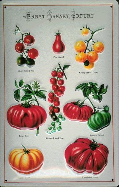 Blechschild Ernst Benary Erfurt Tomaten Gemüse retro Reklame Schild
